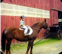 stables-hp
